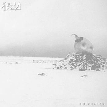 owl album cover